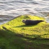 The shy seal that likes to sun on the rocks