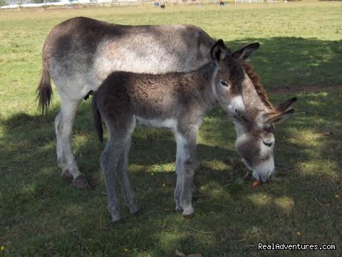 Obanbrae Farm Bed & Breakfast Donkeys