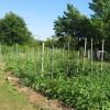 Veggies abound!