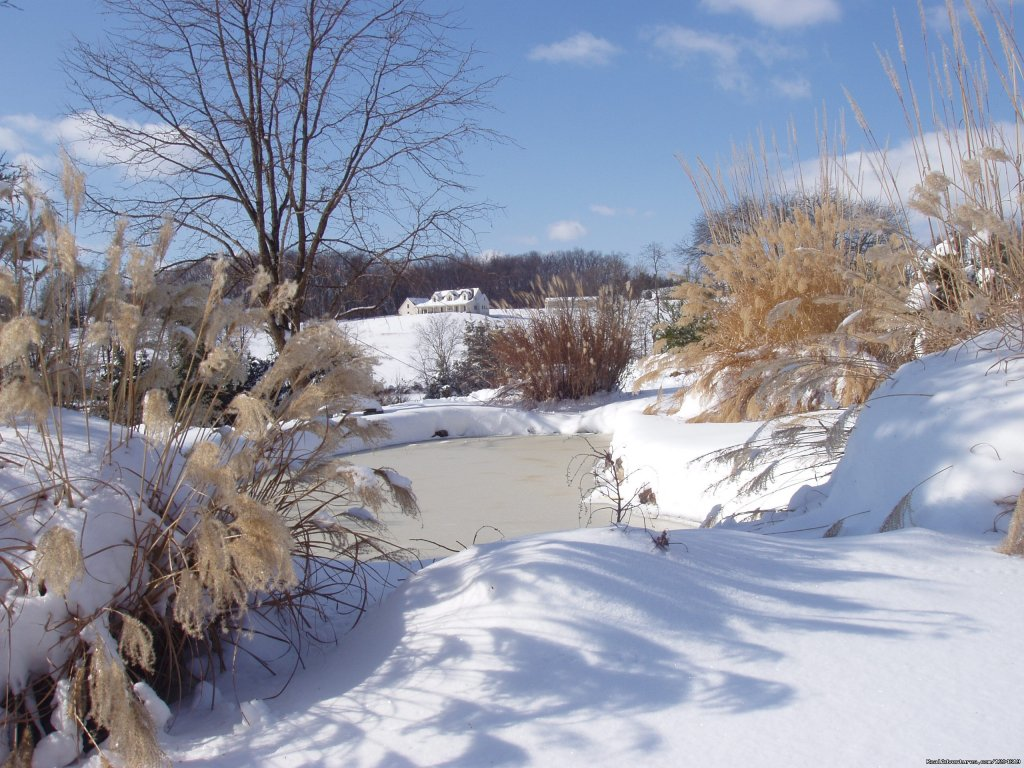 Snow around the ponds | Image #12/21 | Enjoy the Great Outdoors at Fox Hill B&B Suites