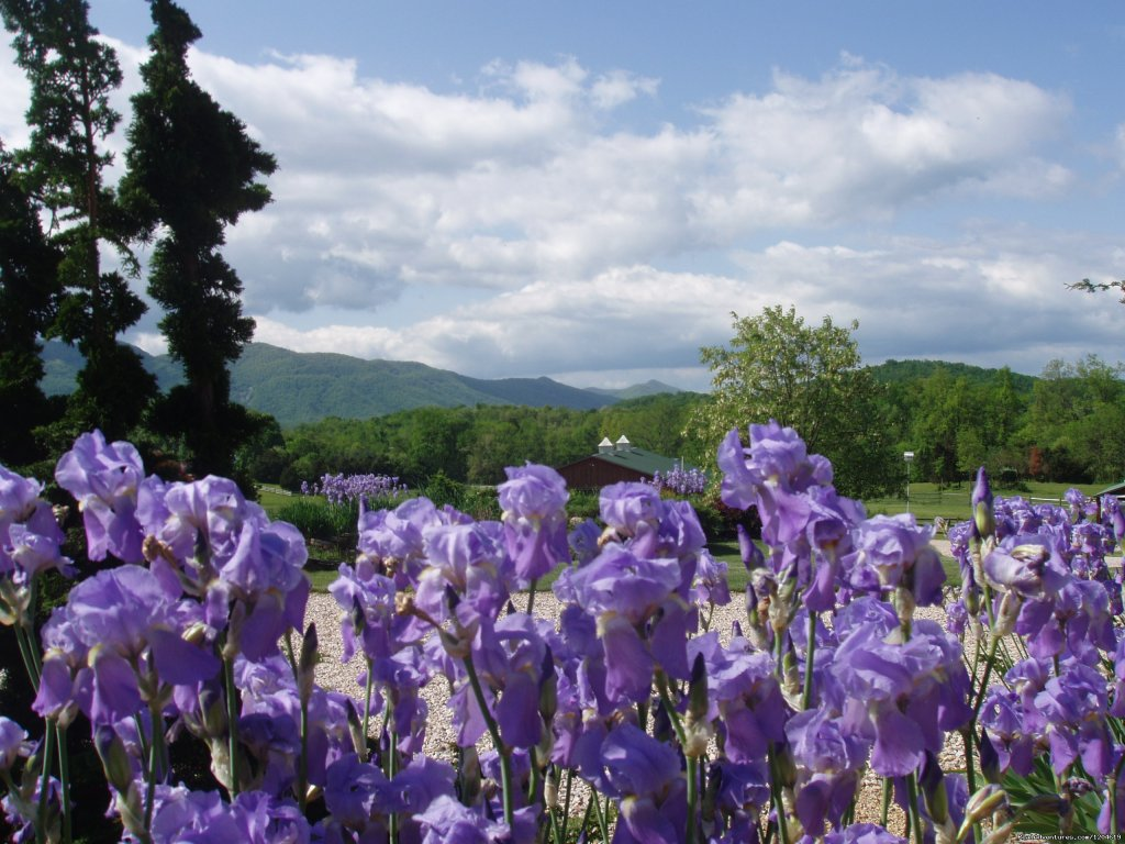 May irises in full bloom | Image #17/21 | Enjoy the Great Outdoors at Fox Hill B&B Suites