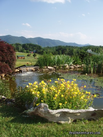 Our Garden Pond - Enjoy the Great Outdoors at Fox Hill B&B Suites