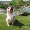 Visiting canine Callie enjoys a break