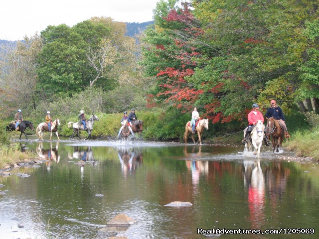 1(1/2)hour Beach Ride and/or 1 hour Ride - Little Pond Stables Inc.