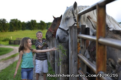 Our Superstar Horses - Woodside Ranch Resort & Conference Center