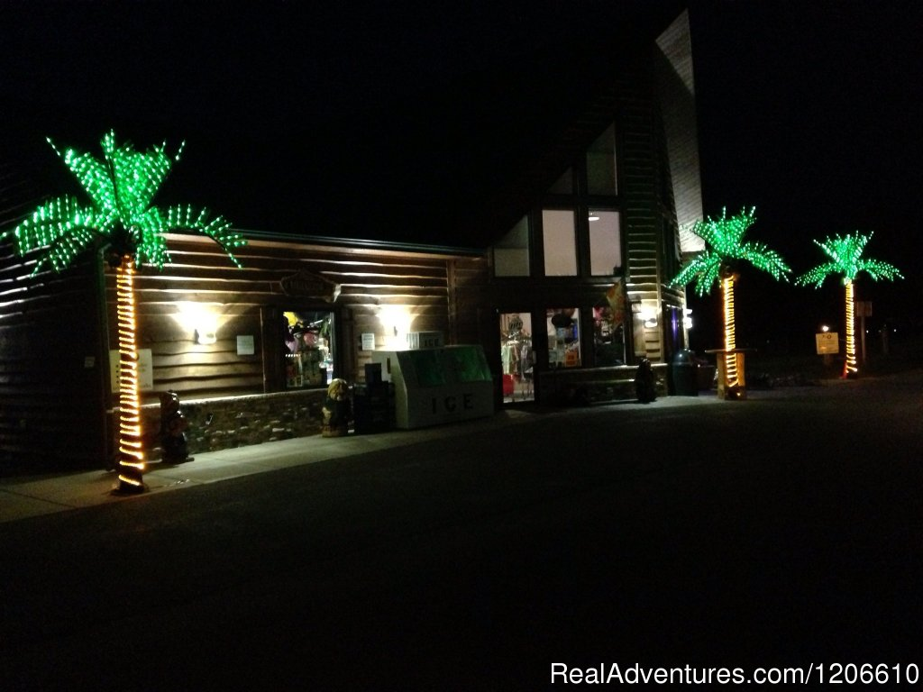 Lighted Palm Trees | Image #21/21 | Silver Springs Campsites Inc