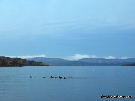 Migrating geese on Table Rock Lake at Anchor Inn on the Lake - Anchor Inn on the Lake Bed & Breakfast