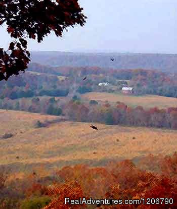 View from the bluff top - Rock Eddy Bluff Farm, escape into the ozark hills