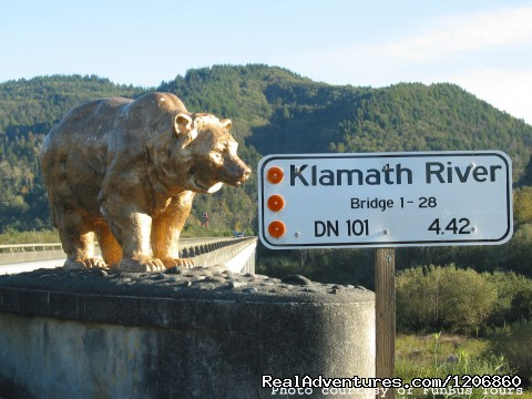 Klamath Bridge Golden Bears - Redwoods at Kamp Klamath RV Park and Campground
