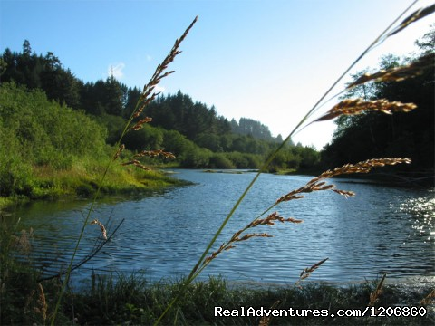 Klamath Esturary Trail - Redwoods at Kamp Klamath RV Park and Campground