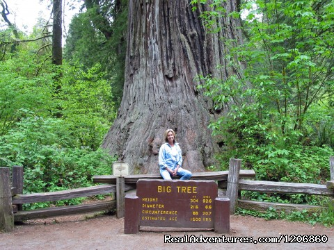 - Redwoods at Kamp Klamath RV Park and Campground