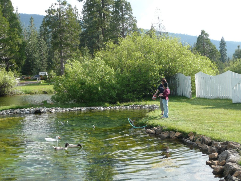 Trout Pond | Image #4/8 | Great lodging & dining near Lassen National Park