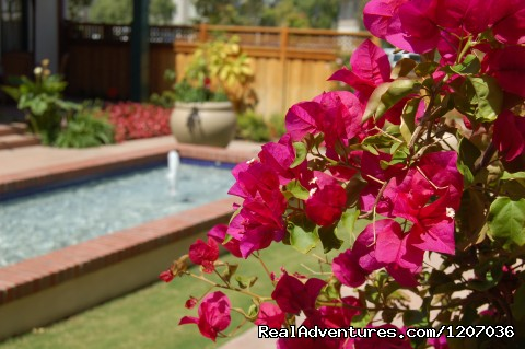 Bouganvillea in courtyard - The 1906 Lodge at Coronado Beach