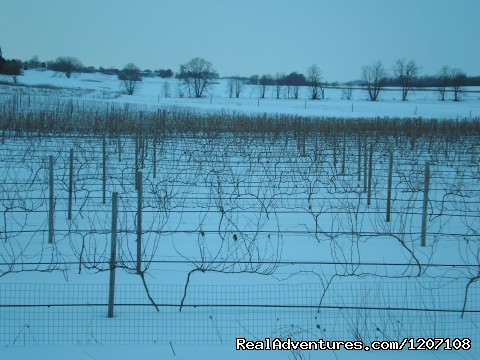 Our Frozen Tundra - Parallel 44 Vineyard & Winery