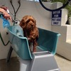 Pet Friendly with Doggie Spa