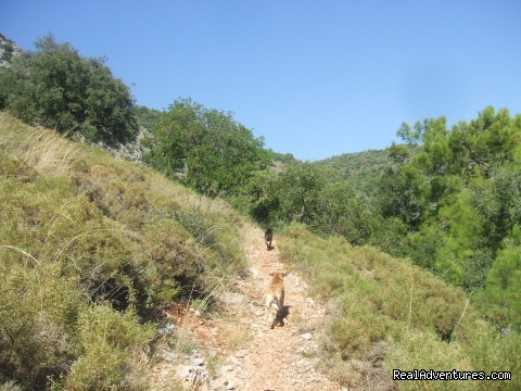 Turunc Pinari way - Hiking in Kayakoy, Turkey: the Spirit of Lycia