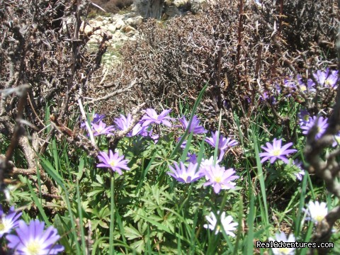 Mountain vegetation - Hiking in Kayakoy, Turkey: the Spirit of Lycia