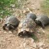 Turtles family on the way