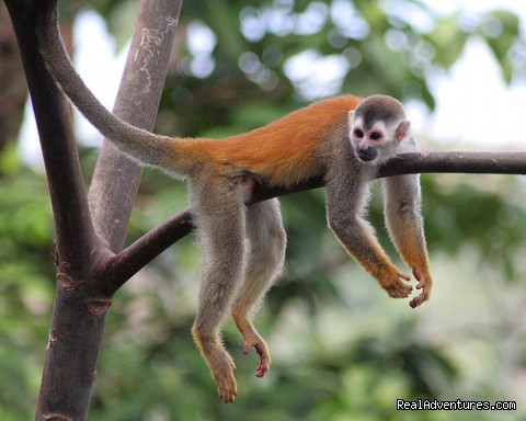 Wildlife in Manuel Antonio National Park - Costa Rica Flexi Vacations