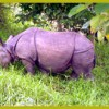 Royal Chitwan National Park Wildlife & Safari Tours KTM, Nepal