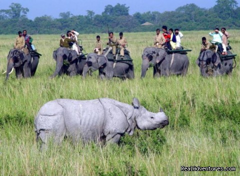 Elephnat Safari at Kaziranga - 14 Nights Wildlife Tour to North East India