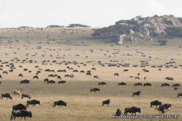 Tour serengeti wildebeest migration - Africa travel destinations, Tanzania unique safari