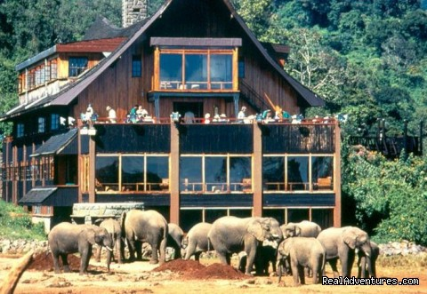 The Ark Hotel  - Great Migration Safari in Kenya