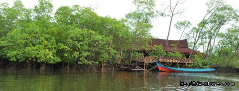 Image #3 of 13 - Borneo SEMPORNA PROBOSCIS River Cruise