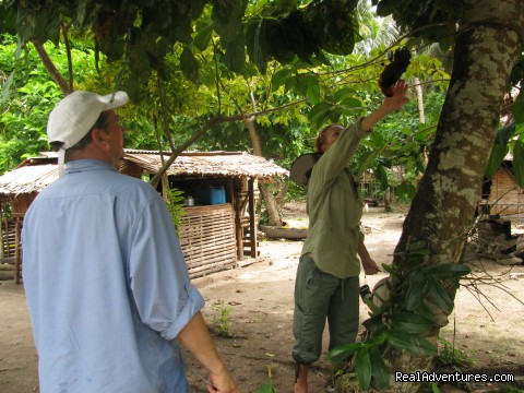 Guest touching the parrot - Villagestay & Trekking in Solomon Islands.