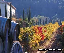 View over the vineyards - Cooking courses. Wine tours. Culinary adventures.