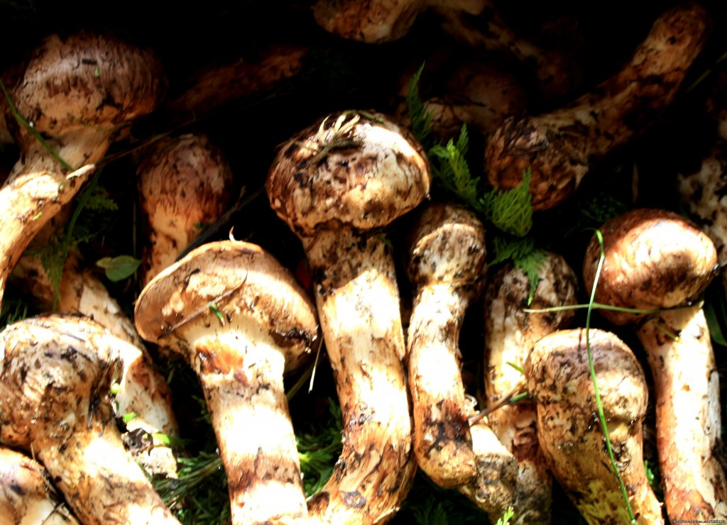 Fresh Mushroom | Image #14/15 | Beautiful Bhutan