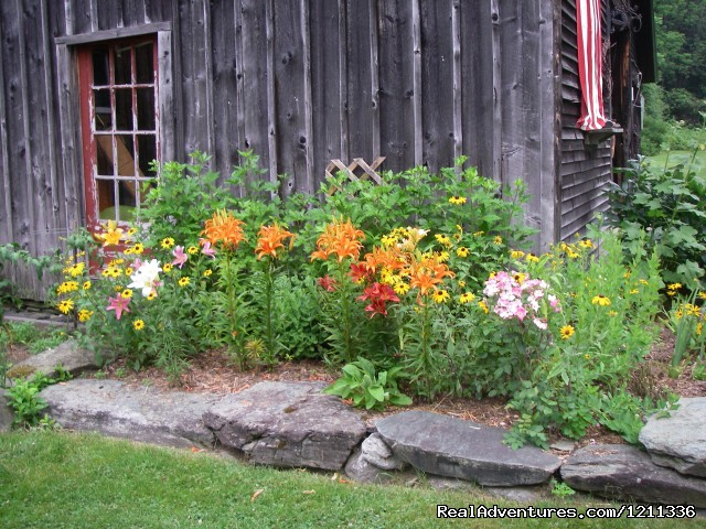 Barn flowers (#2 of 12) - Johnnycake Flats -Country getaway