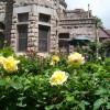 The Castle's Gardens