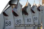 Closeup of halibut caught in Cook Inlet - Alaskan Angler RV Resort, Cabins & Charters