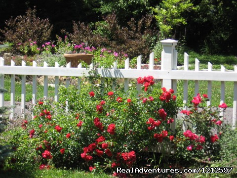 Rose Gardens (#25 of 26) - Sea Bass Cottage - Walking Distance to Ocean