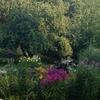 Pond Gardens