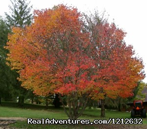 Fall Colors - Rest, Relax and Rejuvenate at Quiet Walker Lodge