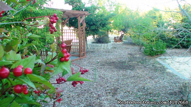 Country Charm Resort - Beautiful seating in the trees. - Country Charm Romantic Resort