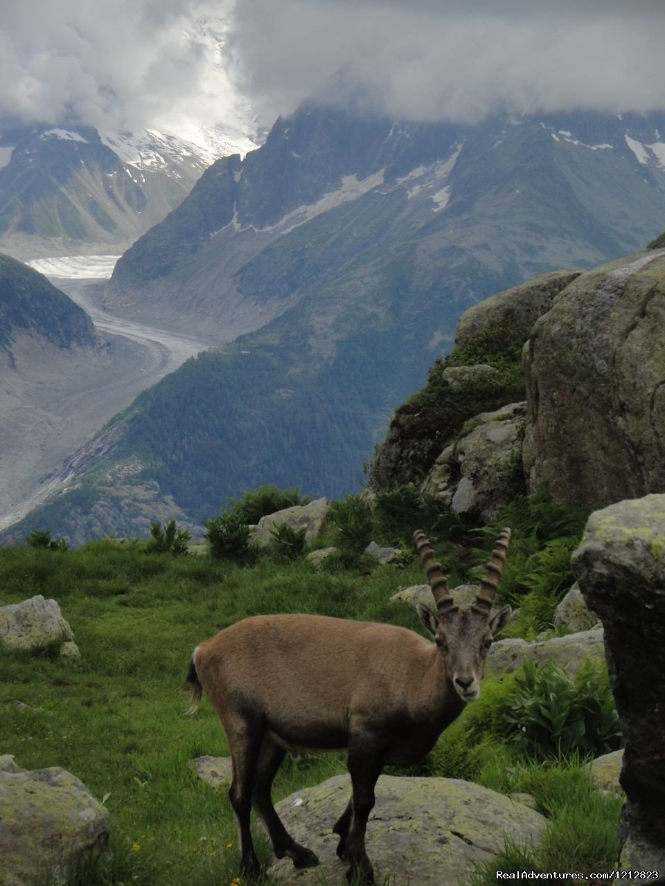 Chamois | Image #8/9 | Guided Treks In The Swiss Alps