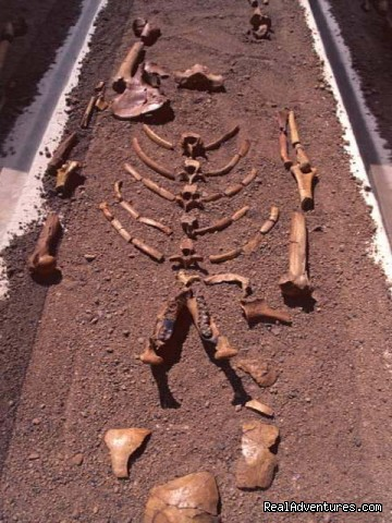 Our earliest hominid - Lucy - Edenland Tour and Travel Ethiopia