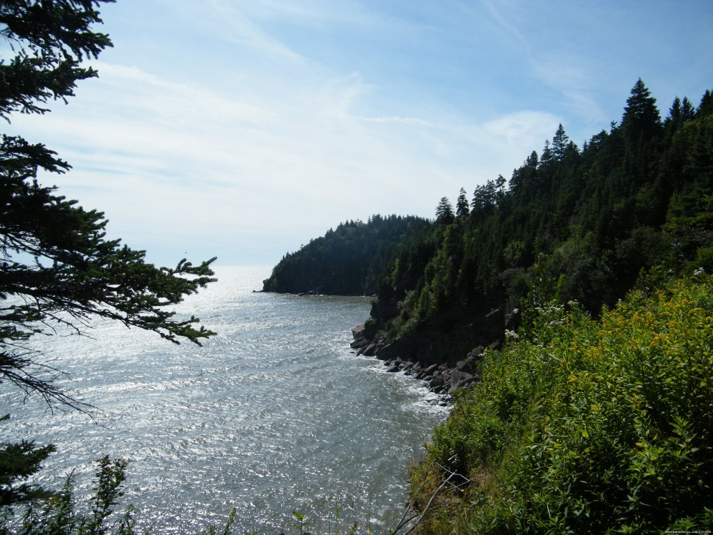 Fundy National park great for a day out | Image #18/19 | Warm english hospitality at Coverdale B&B