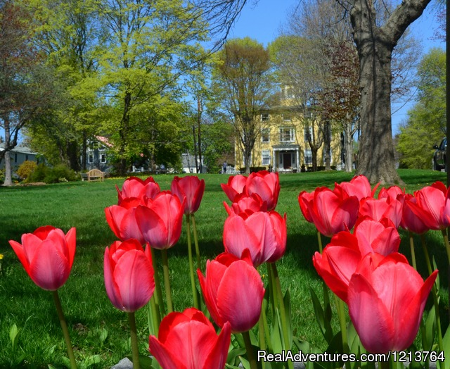 Tulips on the River Green - Captain Lord Mansion, an intimate Maine Coast B&B