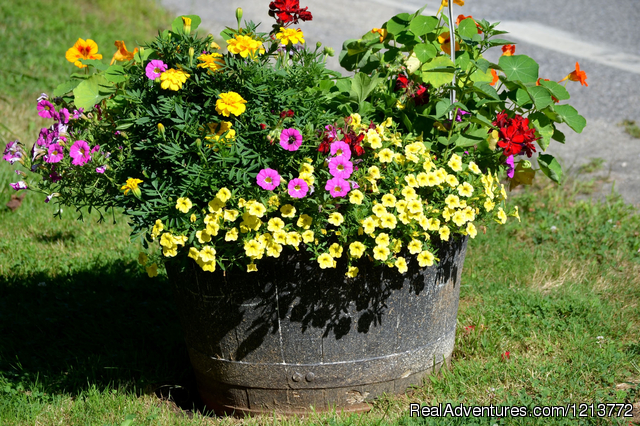 Summer barrel planter to welcome you - Shorelands Guest Resort, casual Maine Cottages