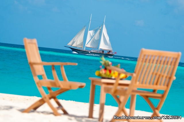 Special Dive Cruise in Maldives Activities & Experiences