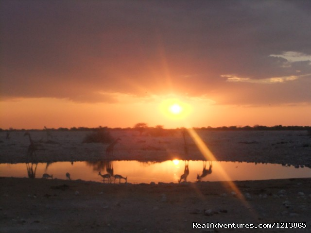Etosha National Park - Bluecrane Safaris Namibia