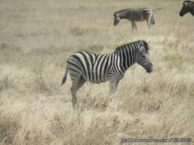 Etosha (#8 of 8) - Bluecrane Safaris Namibia