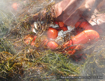 Enjoy a Cabbage Island Lobster Bake. - Boothbay HarborHarbour Towne Inn on the Waterfront