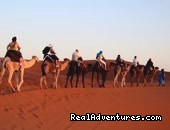 Guide Tours Agent  in Morocco: Trips To Morocco