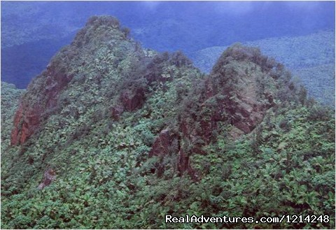 Rainforest 1/2 Day Excusion     - Bioluminescent Lagoon Puerto Rico Eco Action Tours