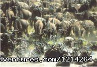 Image #2 of 6 - Hamerkop Safaris - Kenya's Best Tour Operators
